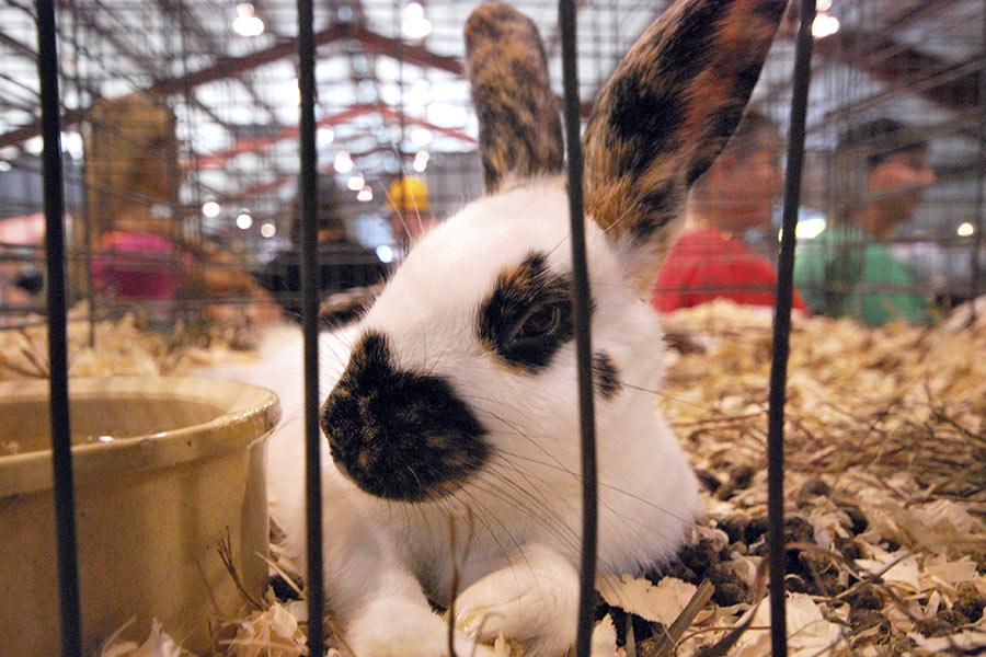 Image result for Fair rabbit